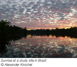 Sunrise at a study site in Brazil