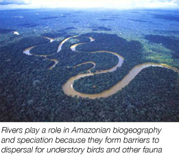 Rivers and biogeography