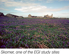 Skomer one of the EGI studysites