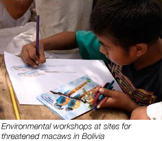 Environmental workshops at sites for threatened macaws in Bolivia